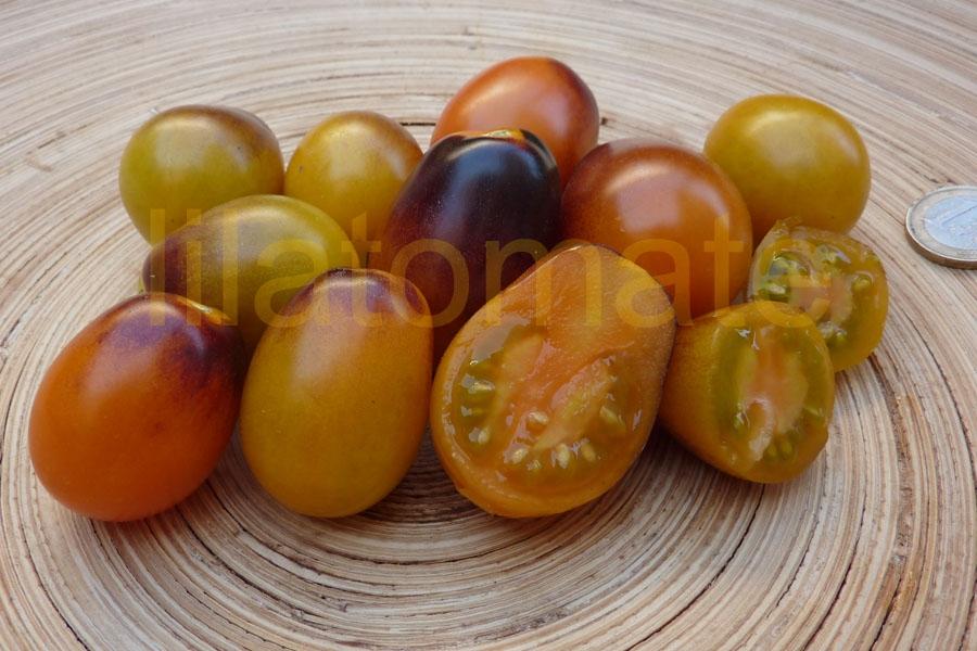 Tomate 'Indigo Kumquat, oval lang' Saatgut