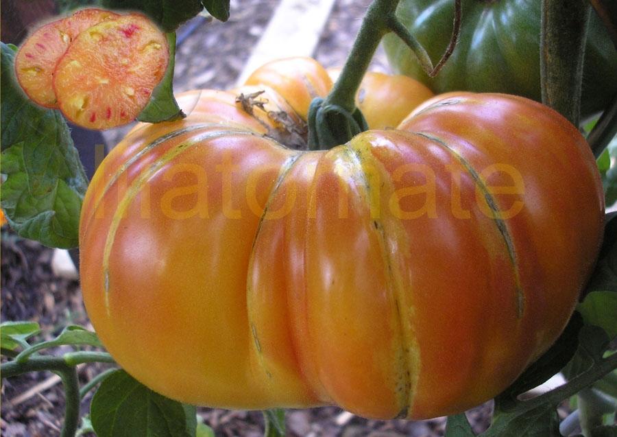 Tomate 'Ananastomate' Saatgut