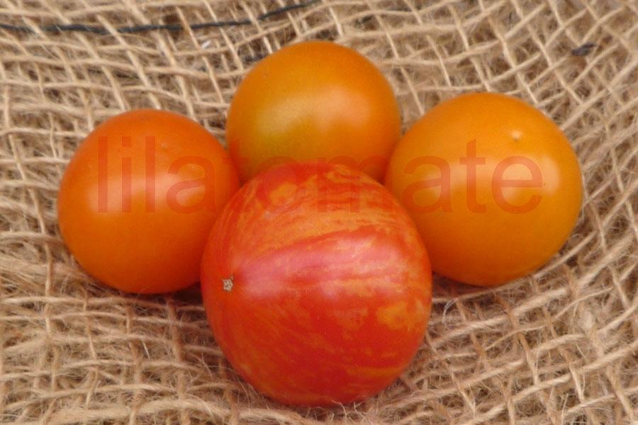Tomate 'Pixie Striped' Saatgut