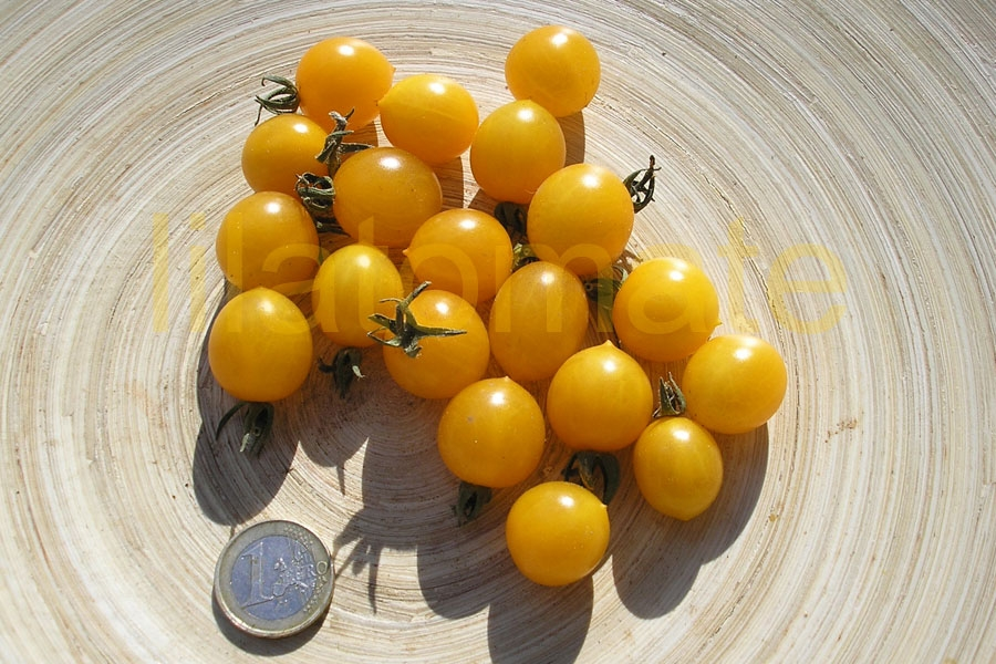 Tomate 'Clementine x Isis Candy' Saatgut