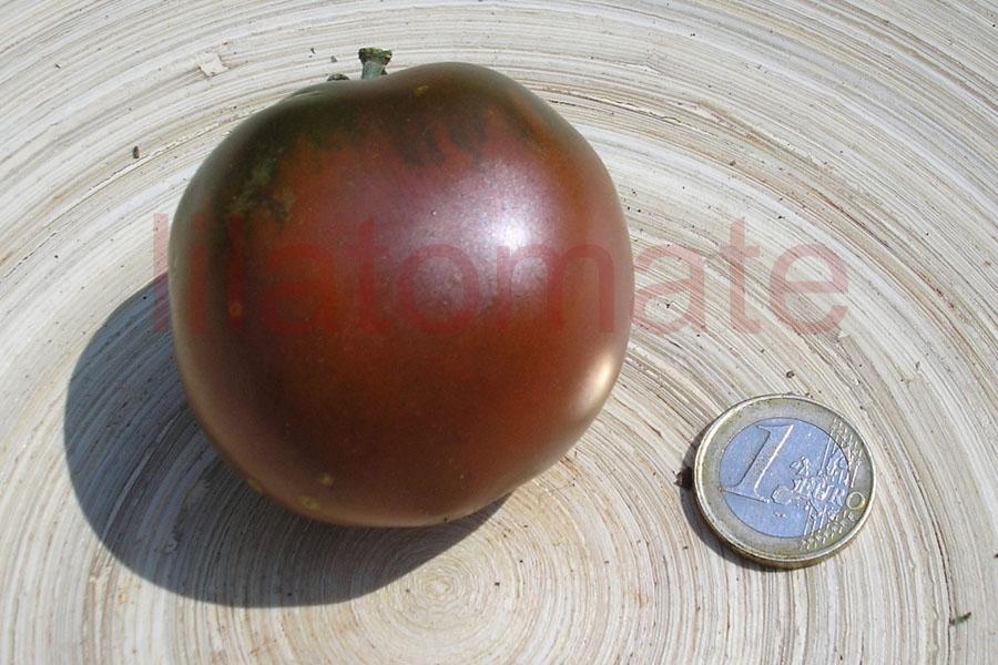 Tomate 'Black Plum, oval mittelgroß' Saatgut