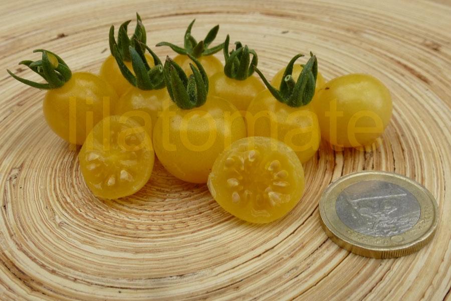 Tomate 'Bianca, Weiße Wildtomate' Saatgut