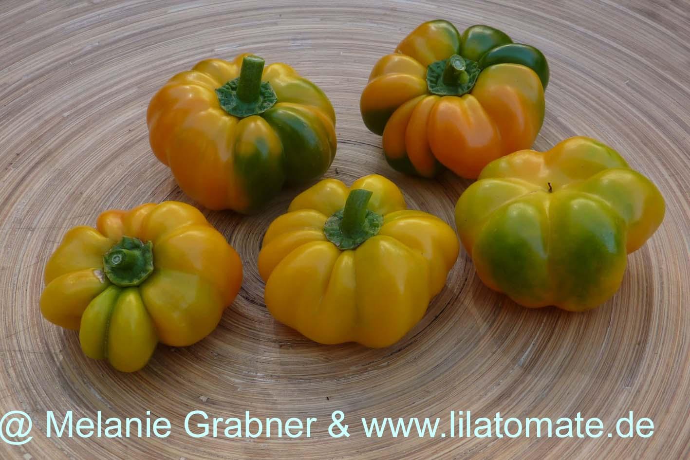 Paprika 'Tomatenpaprika, gelb' Saatgut