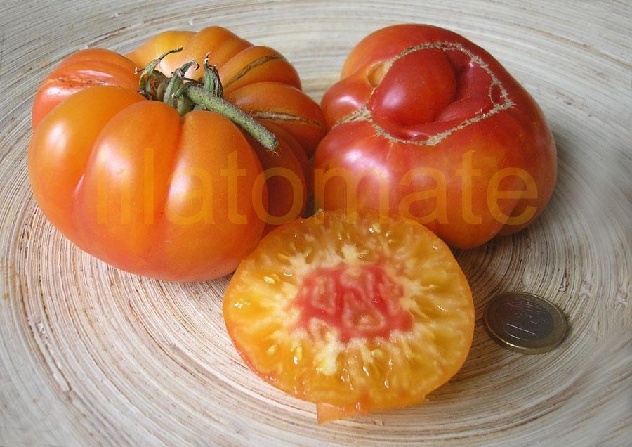 Tomate 'Olympische Flamme' Saatgut