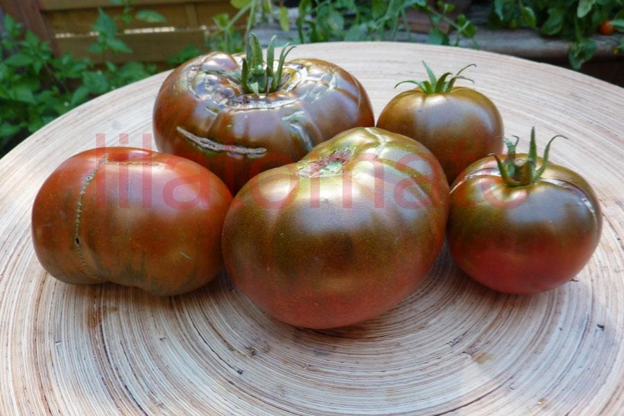 Tomate 'Sputnik' Saatgut