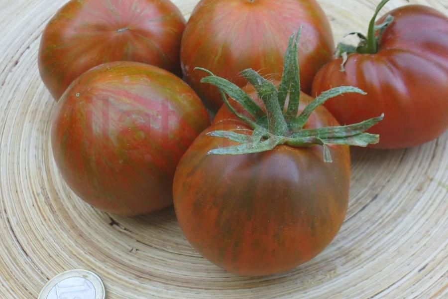 Tomate 'Black and Red Boar' Saatgut