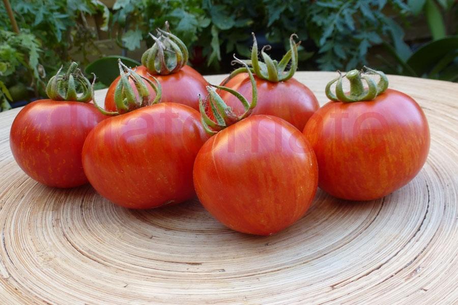 Tomate 'Rotes Zebra' Saatgut