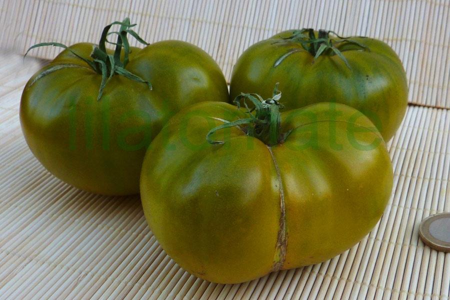 Tomate 'Cherokee Green'  Saatgut