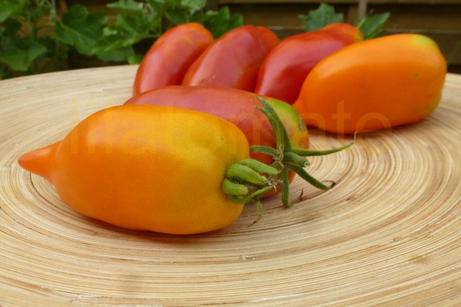 Tomate 'Gelbe Paprika' Saatgut