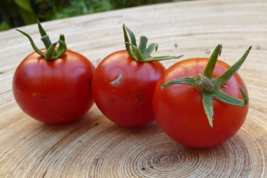 Tomate 'Ernteglück' Saatgut