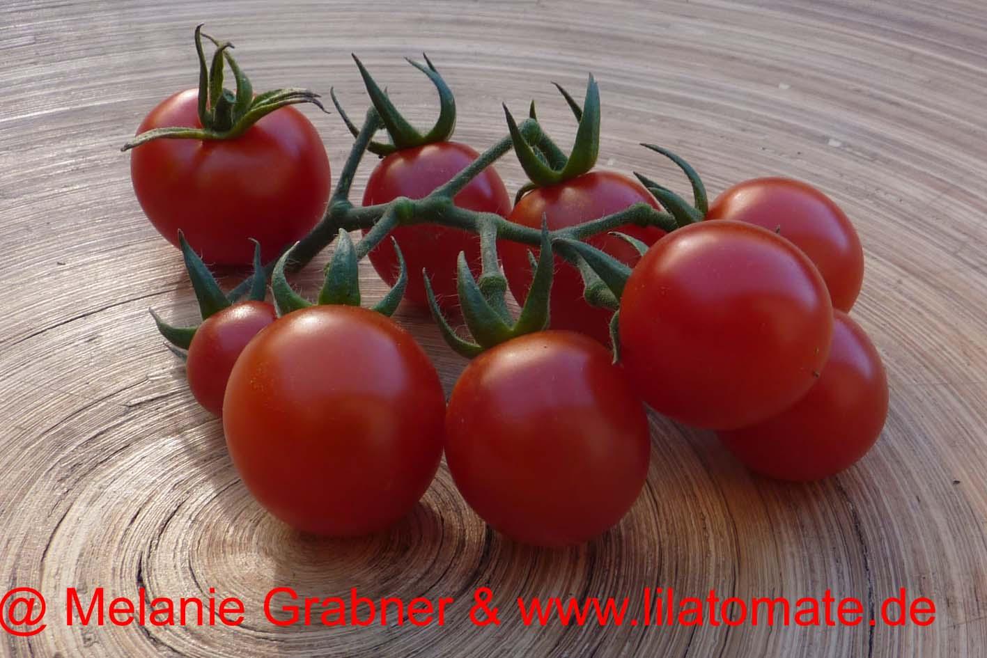 Tomate 'Mexikanische Honigtomate' Saatgut