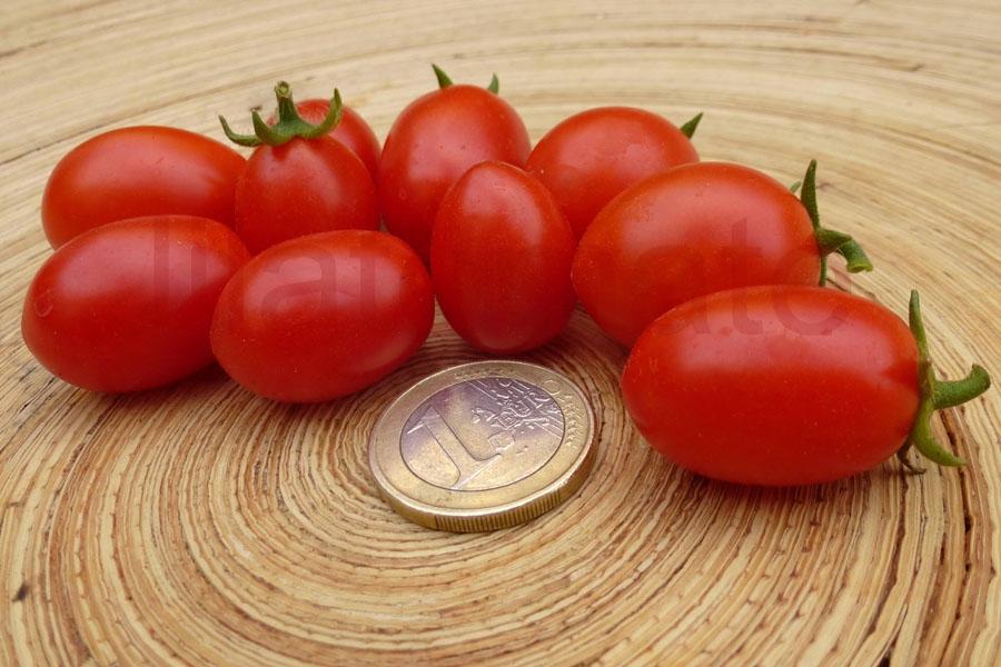 Tomate 'Mikrotomate' Saatgut