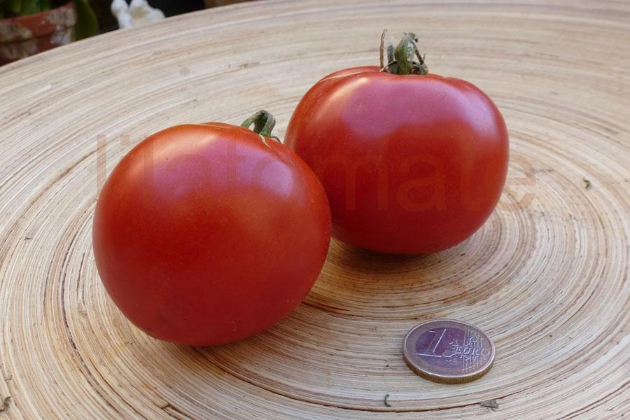 Tomate 'Jacubar' Saatgut