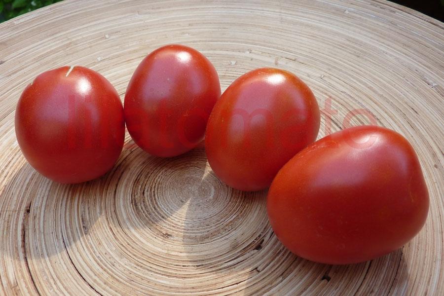 Tomate 'Omas Beste' Saatgut