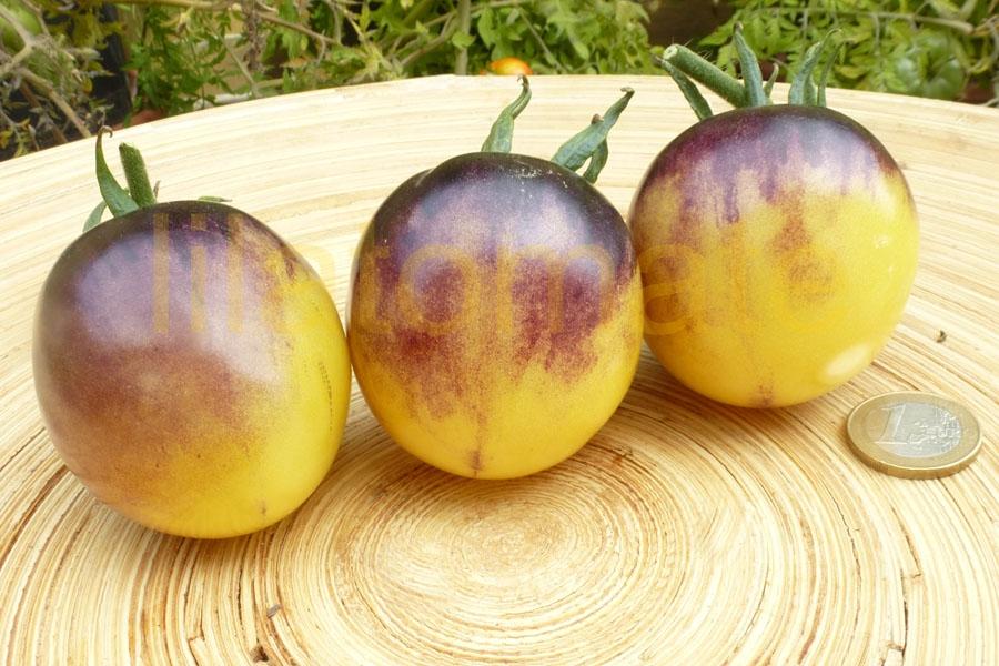 Tomate 'White Purple' Saatgut
