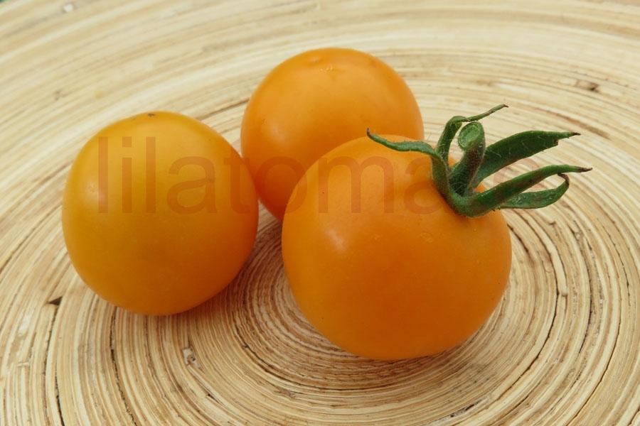 Tomate 'Alaska, gelb' Saatgut