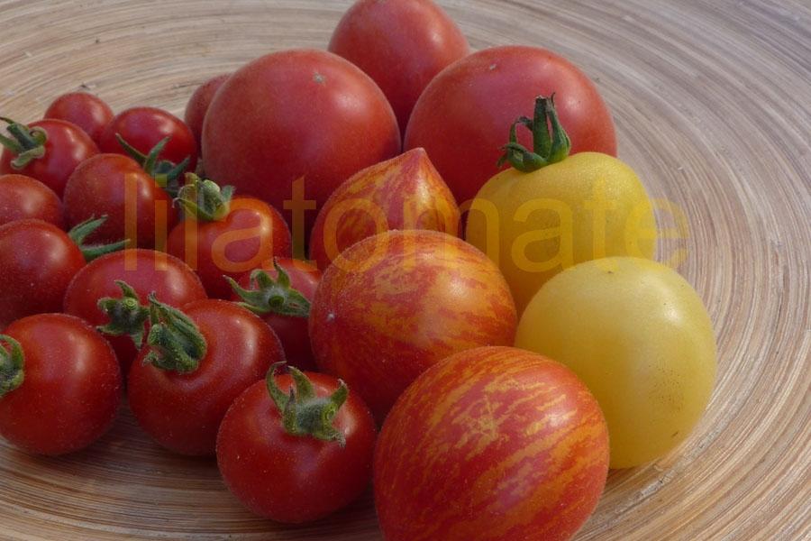 Tomate Sortenmischung 'Kuscheltomaten' Saatgut