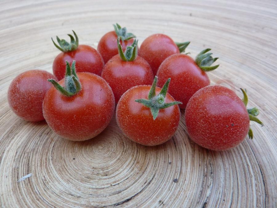 Tomate 'Angora Supersweet' Saatgut
