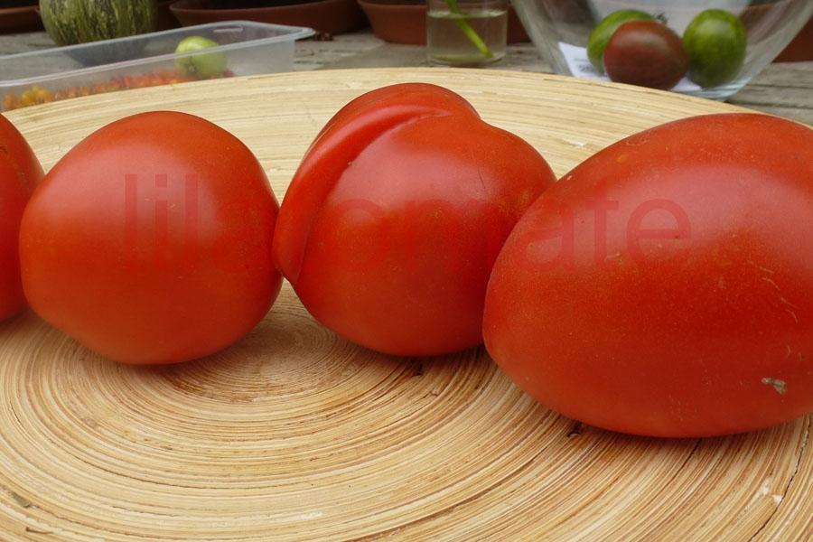 Tomate 'Roma' Saatgut