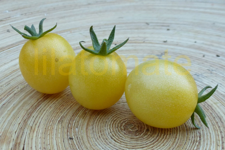 Tomate 'Schneewittchen' Saatgut