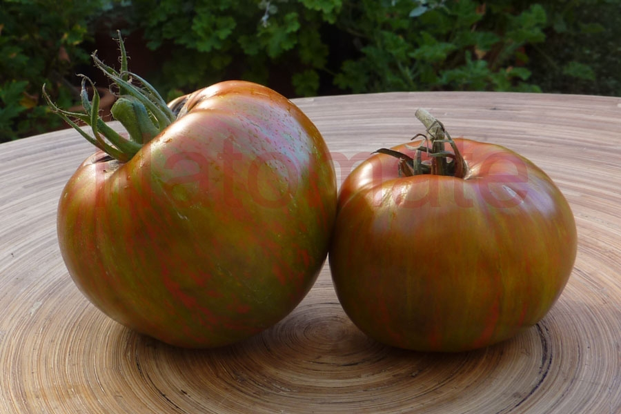 Tomate 'Black Zebra' Saatgut