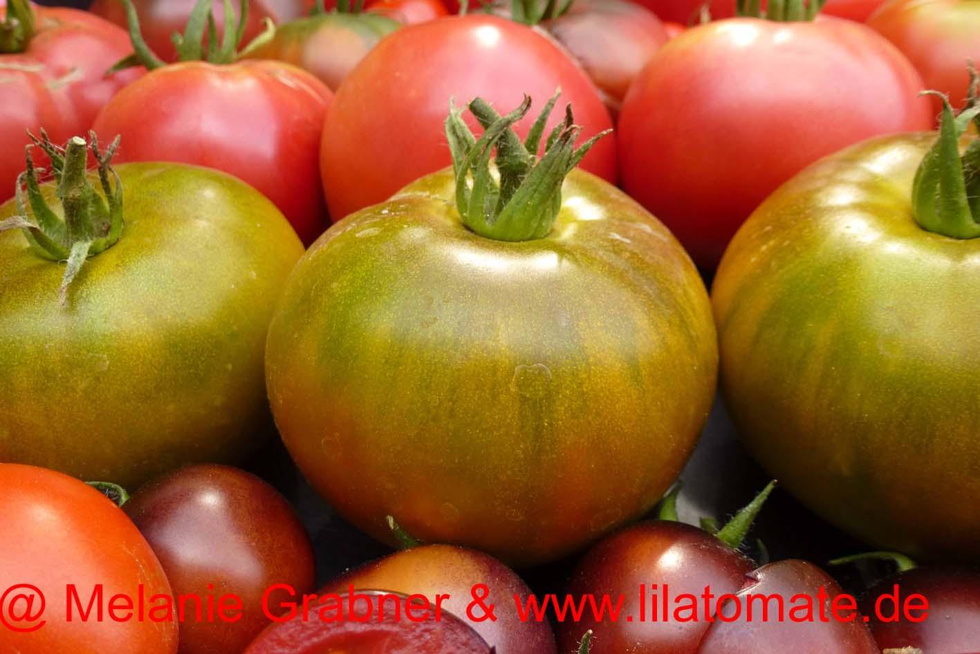 Tomate 'Grüne Ananas' Saatgut