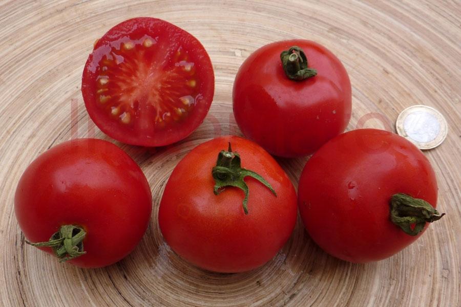 Tomate 'Nadja' Saatgut