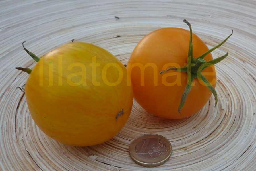 Tomate 'Yellow Zebra' Saatgut