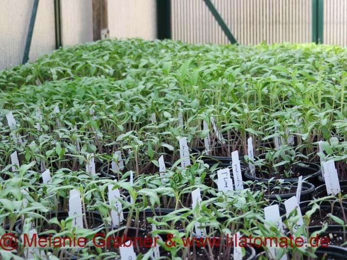0 Anmerkungen zur Keimung und Pflanzenentwicklung 2017