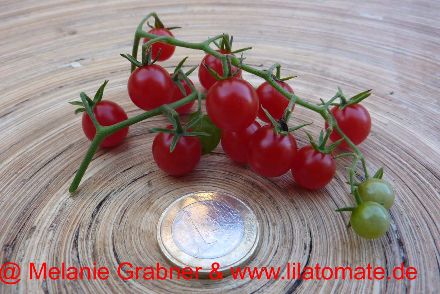 Tomate 'Argentinische Wildtomate' Saatgut