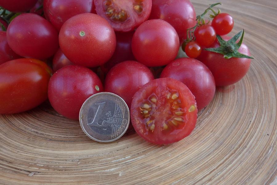 Tomate 'Drei Käse hoch' (3 Käse hoch) Saatgut