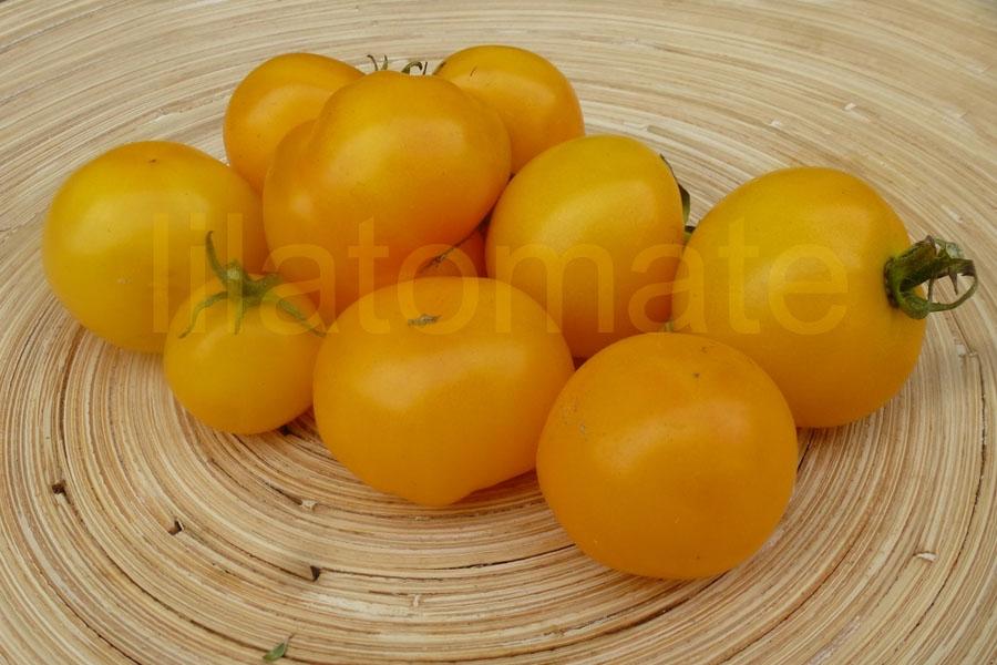 Tomate 'Talent, gelb' Saatgut