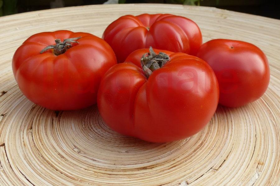 Tomate 'Vierländer Platte' Saatgut