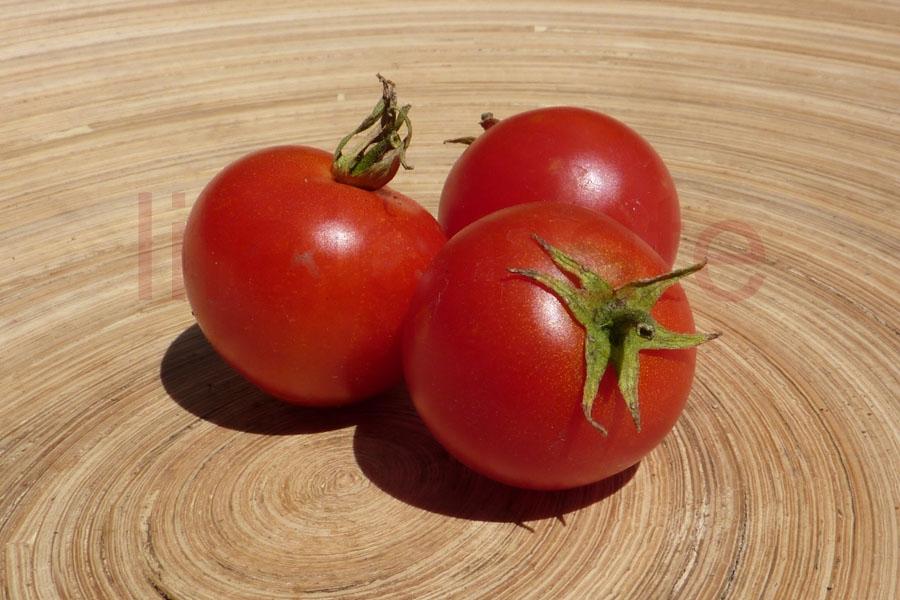Tomate '42 Days' Saatgut