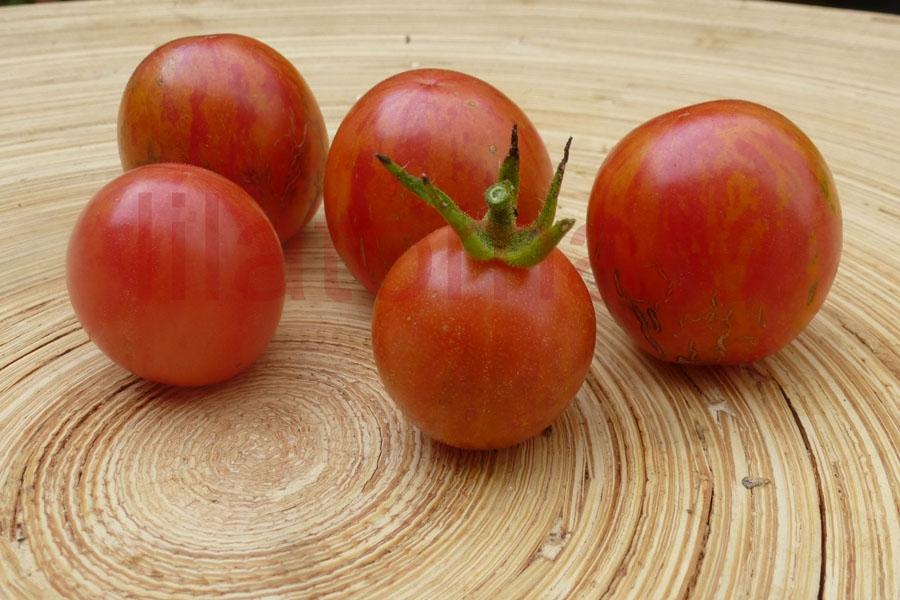 Tomate 'Cherriots of fire' Saatgut