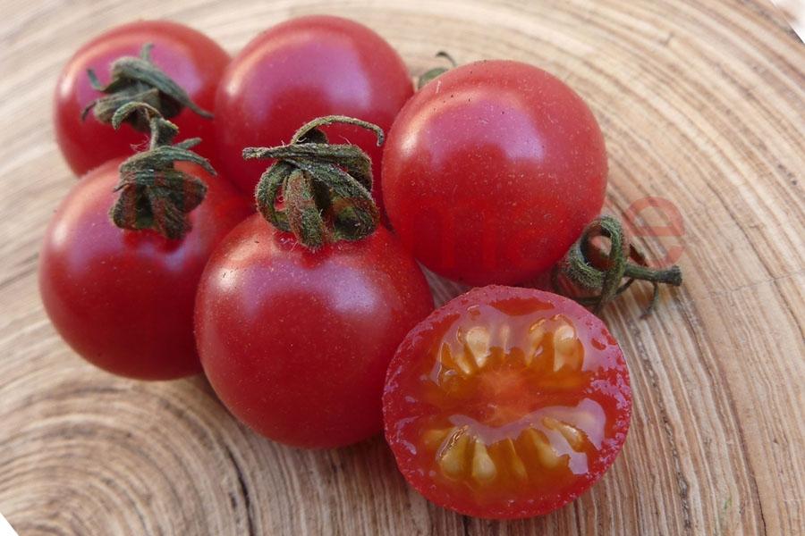 Tomate 'Wildtomate, rot, rund' (Arbeitstitel) Saatgut