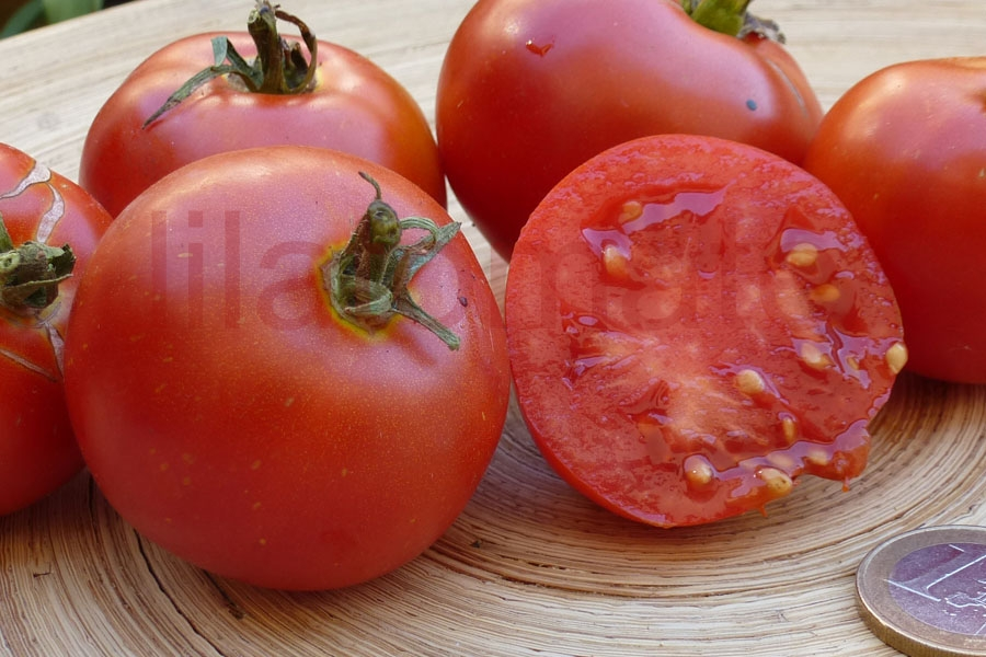 Tomate 'Malina' Saatgut