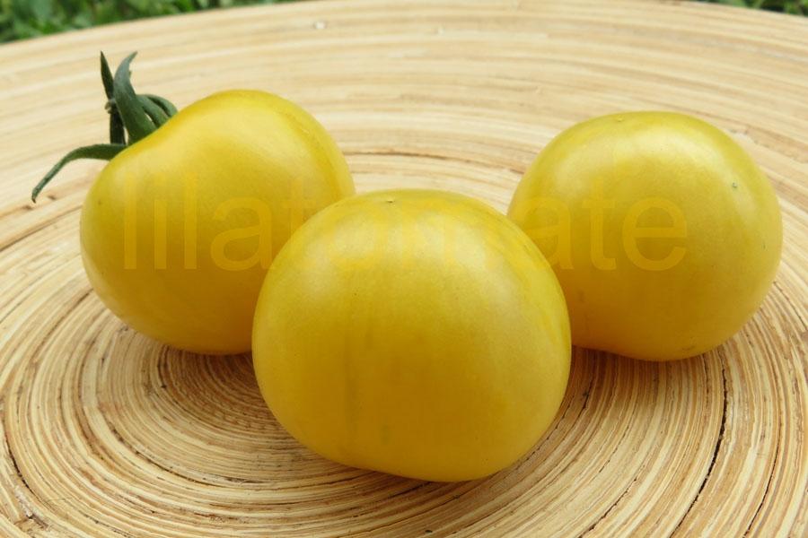 Tomate 'Yellow Vernisage' Saatgut