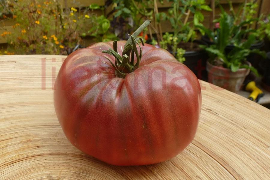 Tomate 'Price Purple' Saatgut