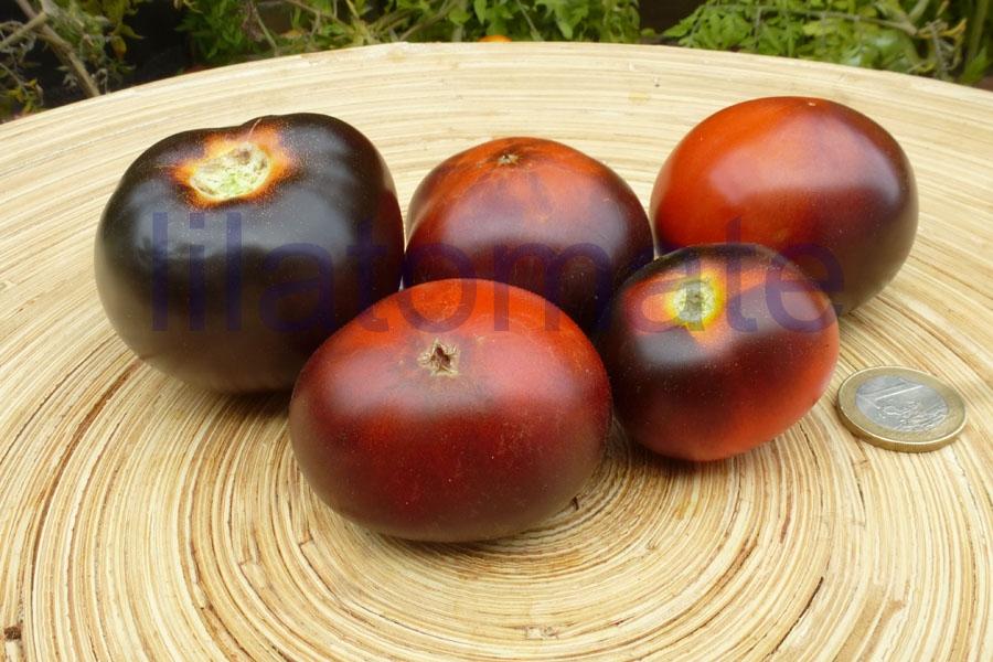Tomate 'Clackermans Blue Berrry' Saatgut