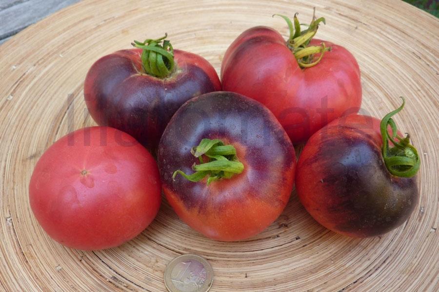 Tomate 'Amethyst Yewel' Saatgut
