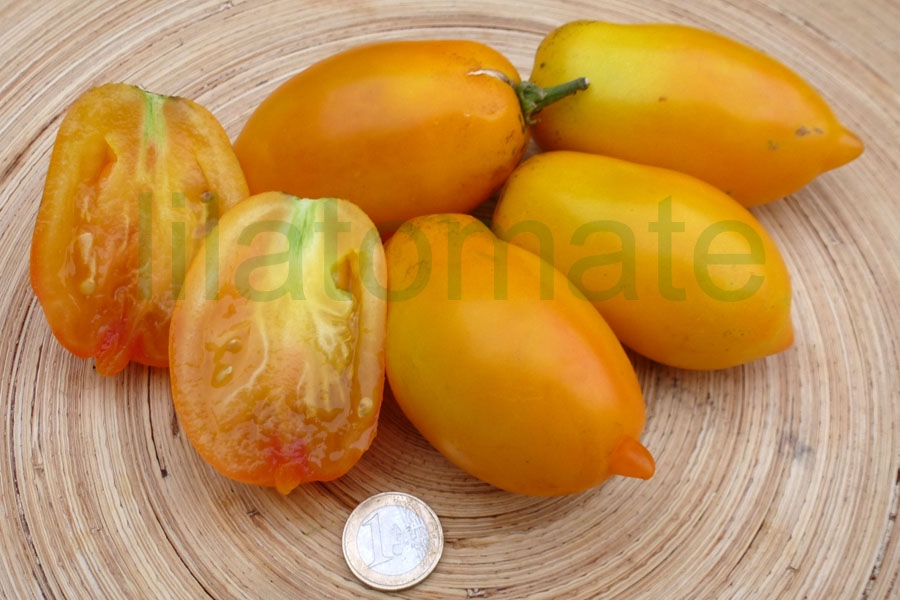 Tomate 'Andenhorn, gelb (Arbeitstitel)',  Saatgut