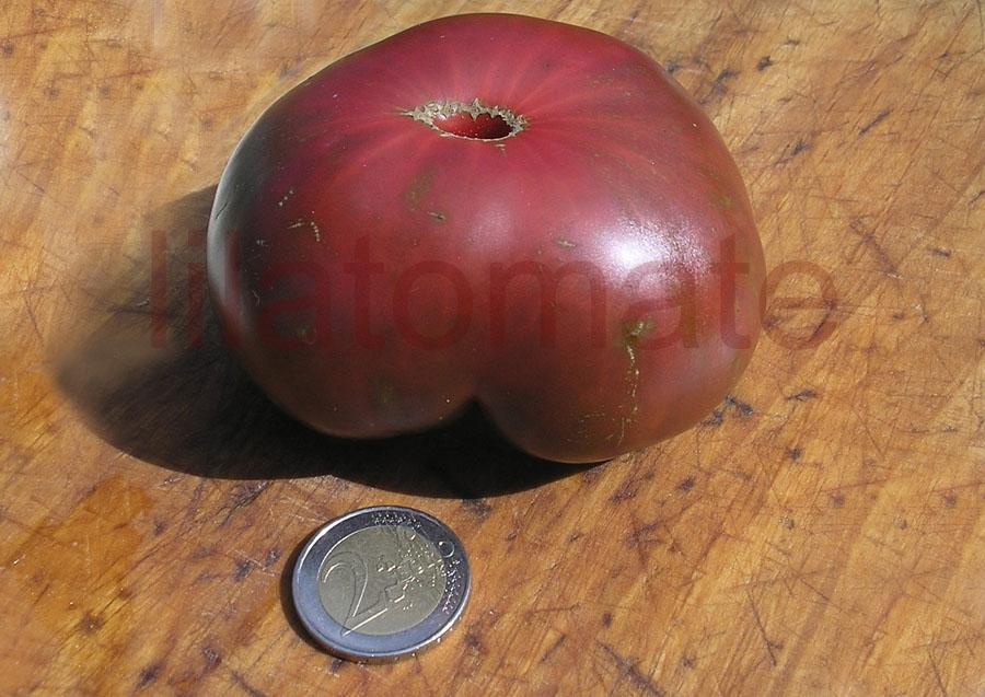 Tomate 'Cherokee Purple, flachrund' Saatgut