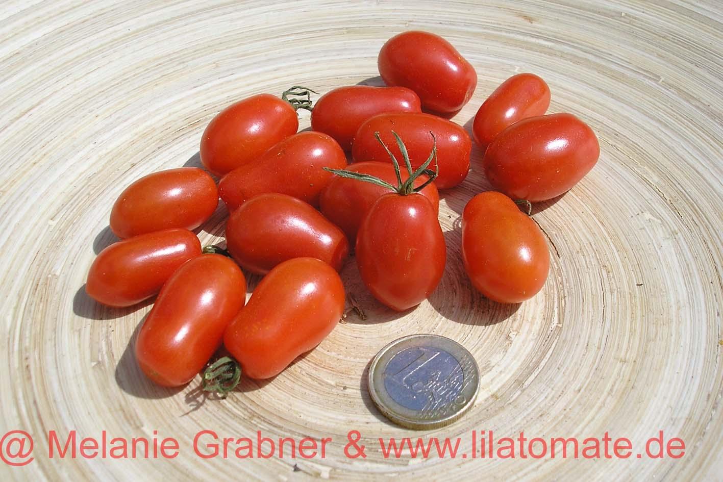 Tomate 'Fioline' (Arbeitstitel) Saatgut