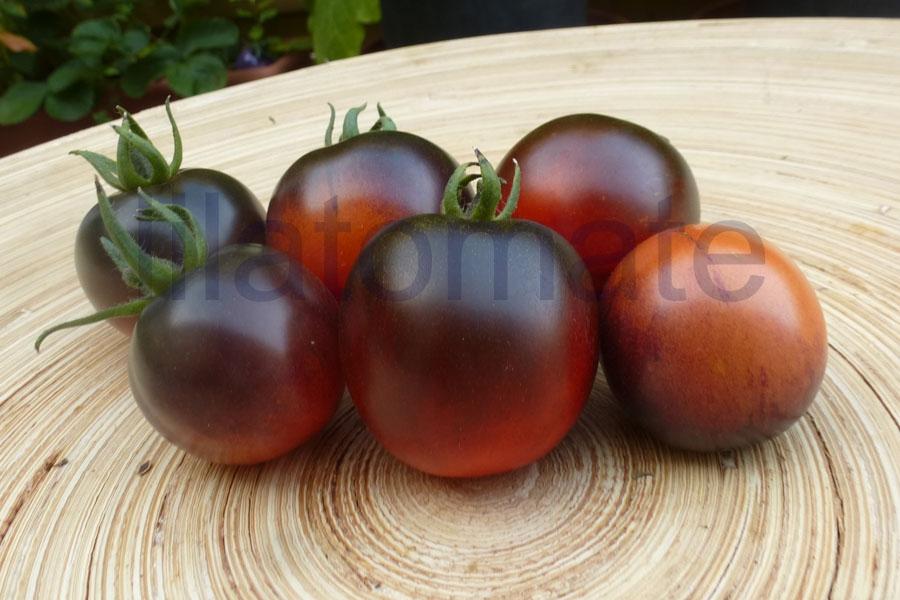 Tomate 'TW 25' Saatgut