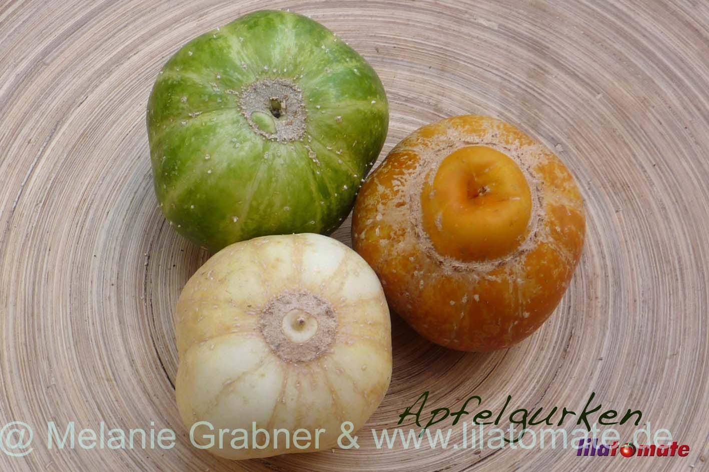 Gurke 'Apfelgurke Richmond Green River Apple' Saatgut