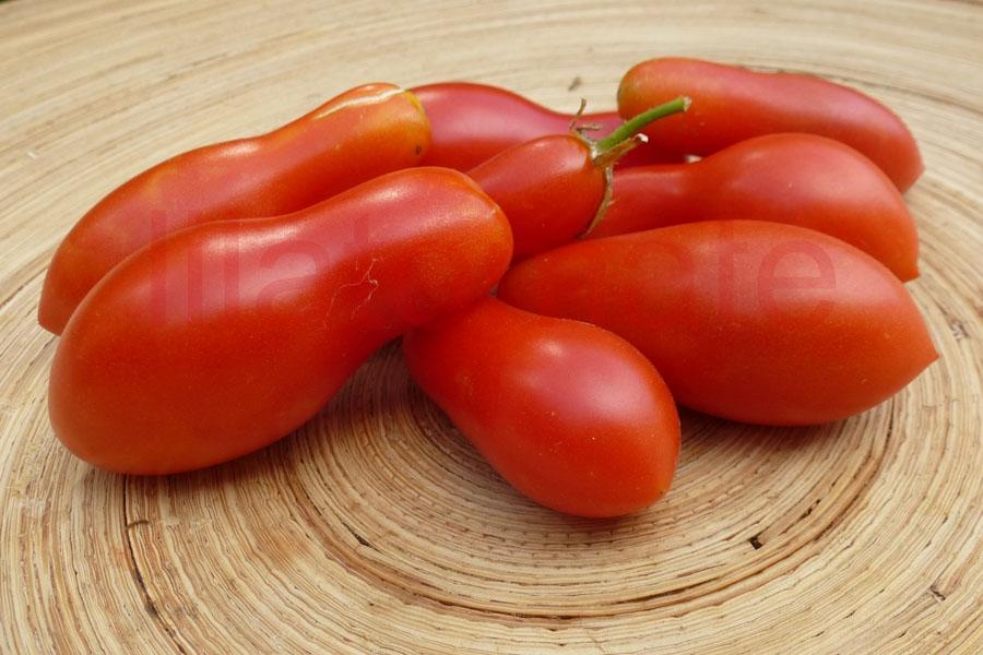 Tomate 'Carnika' Saatgut