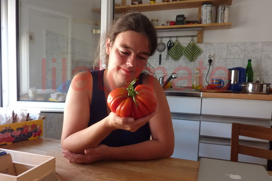 Tomate 'Russische Fleischtomate' Saatgut