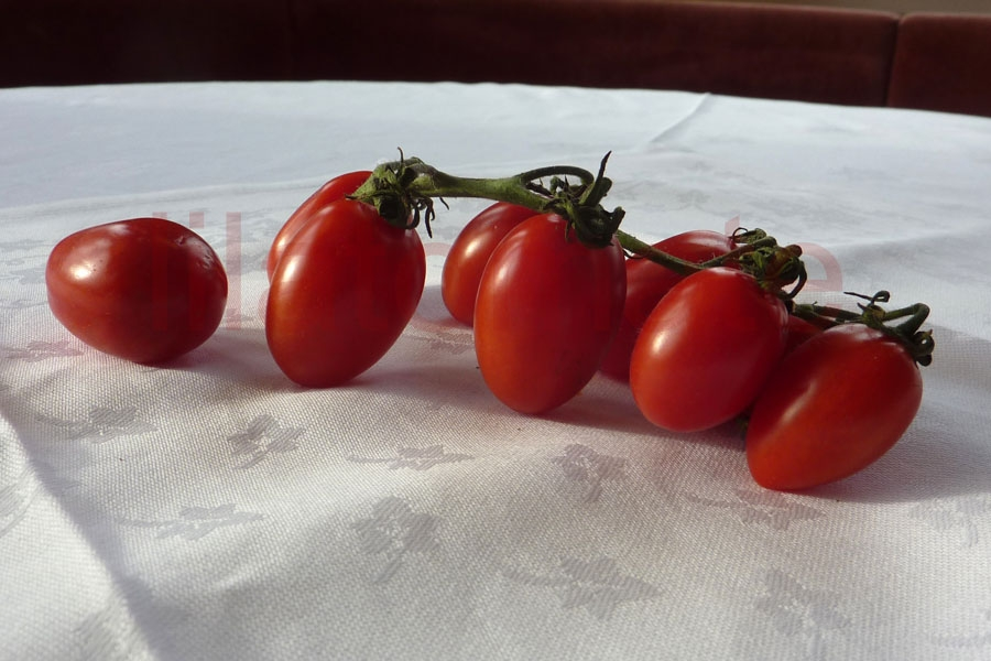 Tomate 'Datteltomate aus Bozen' (Arbeitstitel) Saatgut