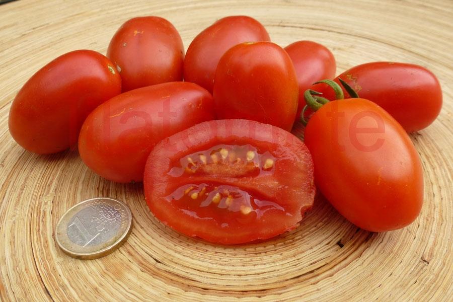 Tomate Sortenmischung 'Romanello, Mischung ' Saatgut